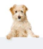 Regard et appareil-photo de chien. images libres de droits