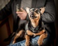 Regard fier de chien Photos libres de droits