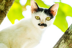 Regard fixe blanc de chat sur l'arbre Photo libre de droits