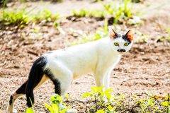 Regard fixe blanc de chat sur la terre Photos stock