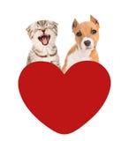 regard miaulant de chat et de chien pour le coeur rouge D'isolement sur le blanc Photos stock