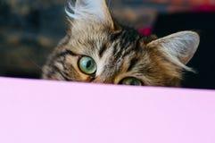 Regard mignon de chat par le contexte Images libres de droits