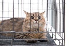 Regard mignon de chat tigré photographie stock libre de droits