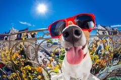 Regard muet idiot fou de fisheye de chien Photographie stock