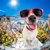 Regard muet idiot fou de fisheye de chien Images libres de droits