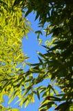 Regard par le bambou Image libre de droits