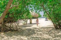 Regard par les arbres de palétuvier en plage d'Aruba Photographie stock libre de droits
