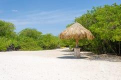 Regard par les arbres de palétuvier en plage d'Aruba Photos libres de droits