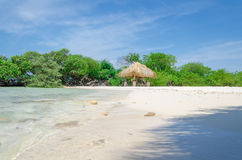 Regard par les arbres de palétuvier en plage d'Aruba Images stock