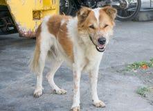 Regard pauvre de chien à quelque chose Photographie stock libre de droits