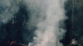 Regard scénique avec de la fumée et la cendre Feux dramatiques avec des brindilles et des firewoods clips vidéos