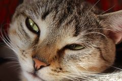 regard somnolent de chat images stock