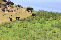 Regard vers le bas sur les éléphants africains photographie stock