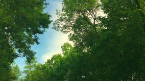 Regardant par des dessus des arbres tandis que le soleil brille par le feuillage vert, forêt d'été le coucher du soleil banque de vidéos