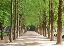 The popular Ginkgo Tree Lane in Nami Island, South Korea stock photos