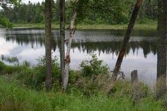 Regarder dans fixement le lac photo libre de droits