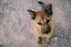 Regarder de observation se reposant d'extérieur de chien sans abri fixement l'appareil-photo Photographie stock