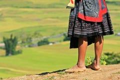 Regarder la rizière photographie stock libre de droits