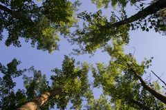 Regarder le ciel de la terre photo libre de droits