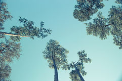 Regarder le ciel par les arbres image stock