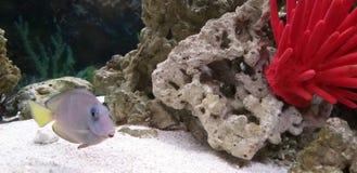Regarder les observateurs de l'aquarium image stock
