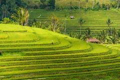 Regarder les padi en terrasse de riz d'en haut Image libre de droits