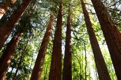 Regarder les pins images libres de droits