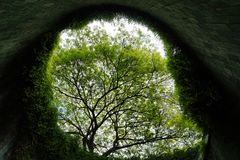 Regardez au-dessus des arbres le centre du parc de mise en boîte de fort, Singapour photos libres de droits