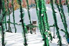 Regardez d'un chat gris avec une patte augmentée photos stock