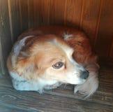 Regardez d'un chien Photographie stock libre de droits