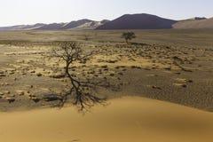 Regardez de la dune 45 dans le désert de Namib, Sossusvlei, Namibie Photo libre de droits