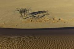 Regardez de la dune 45 dans le désert de Namib, Sossusvlei, Namibie Photos stock