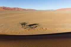 Regardez de la dune 45 dans le désert de Namib, Sossusvlei, Namibie Image stock