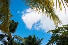 Regardez jusqu'au ciel sous le palmier vert Image libre de droits
