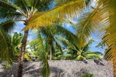 Regardez jusqu'au ciel sous le palmier vert Photo stock