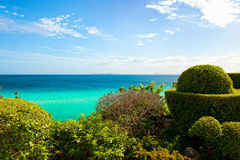 Regardez la cuvette les buissons en Isla Mujeres, Mexique images stock