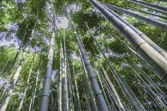 Regardez la forêt de bambou de cime d'arbre Photos stock