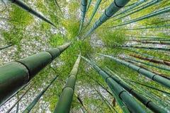 Regardez la forêt en bambou verte Photo stock