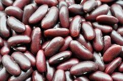 Haricots rouges Photos libres de droits