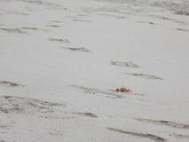 Regardez le crabe Image libre de droits
