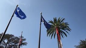 Regardez le drapeau de palmier et de marine d'Etats-Unis banque de vidéos