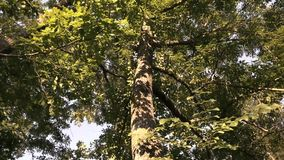 Regardez le fond d'arbre banque de vidéos