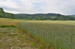 Regardez le paysage de ressort, Bohême du sud, République Tchèque Photographie stock
