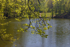 Regardez par des branches sur un étang Image stock