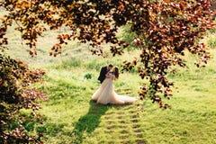 Regardez par les feuilles rouges la jeune mariée de recourbement de marié plus de Images stock