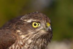 Regardez prédateur Photos libres de droits
