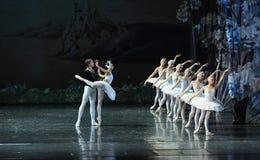 Regardez son image dans le miroir et plaignez-vous -Le lac swan de Lakeside-ballet de cygne Photos libres de droits