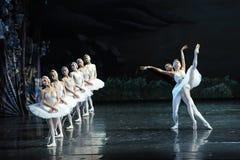 Regardez son image dans le miroir et plaignez-vous -Le lac swan de Lakeside-ballet de cygne Images libres de droits