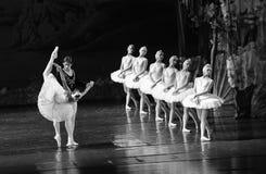 Regardez son image dans le miroir et plaignez-vous -Le lac swan de Lakeside-ballet de cygne Image stock