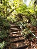Regardez vers le haut des 1000 étapes aux chaînes de Dandenong Image libre de droits